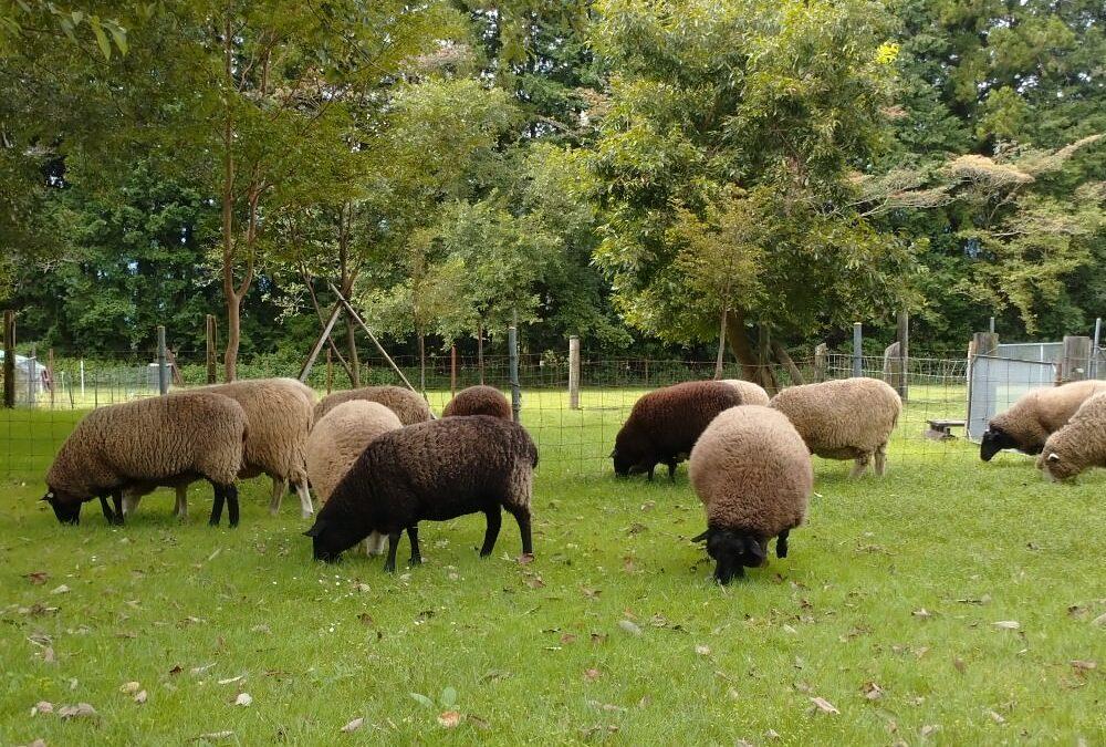 [オンライン講座]Breed Sample ブリードサンプル 12種類の羊の毛からフェルトのサンプルを作る